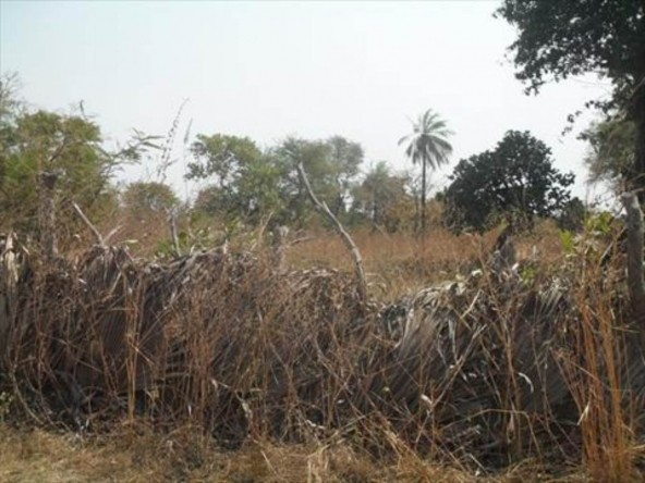 Large Plot of Land for Sale Sanyang 2