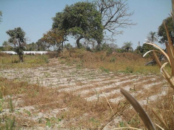 Large plot for sale sanyang MN13 1