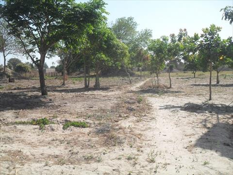 Land for Sale in Brufut Village Gambia