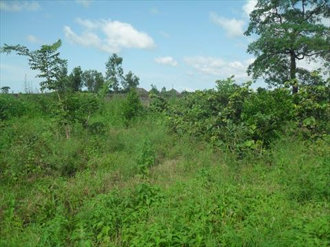 Plot of Land for Sale Brufut Madiana Gambia