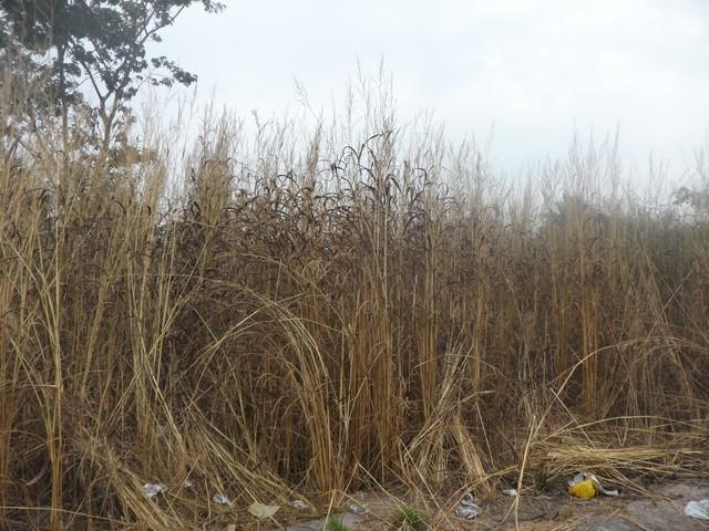 Plot of Land for Sale Tujereng