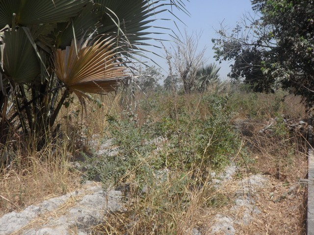 Land For Sale In Gambia
