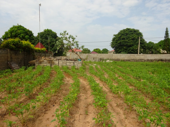 Fenced plot in bijilo for sale